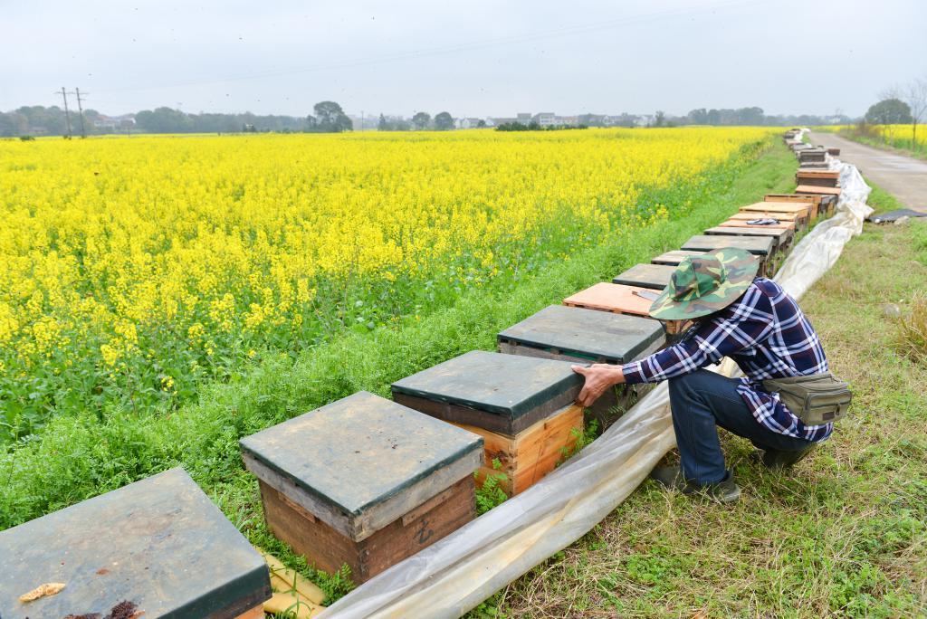 月    日,湖南省衡阳市衡东县高湖镇养蜂人欧金华在调整蜂箱.