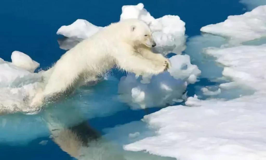 照片中,两个人站在田间,望着漫天大火将田地烧成焦土,却无能为力。 据 CNN 报道,瑞典、冰岛、芬兰、挪威等今年夏天的温度早已超越历史记录,而像这样的森林大火,已经有十数场了。 因为超高温度和树木的可燃性,加之北半球的变暖速度快于全球,这样的自然火灾比比皆是。 在加拿大,魁北克省的野火正以 1000 年未见的速度燃烧。 在另一边的加州,情况也不容乐观,这个夏天,加州已经变成了火上的加州。 据加利福利亚林业局和消防部门表示,加州山火蔓延范围达到 800 平方公里,上千座房屋被烧毁,虽然紧急撤离,仍有 6