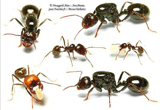 蚂蚁入坑指南