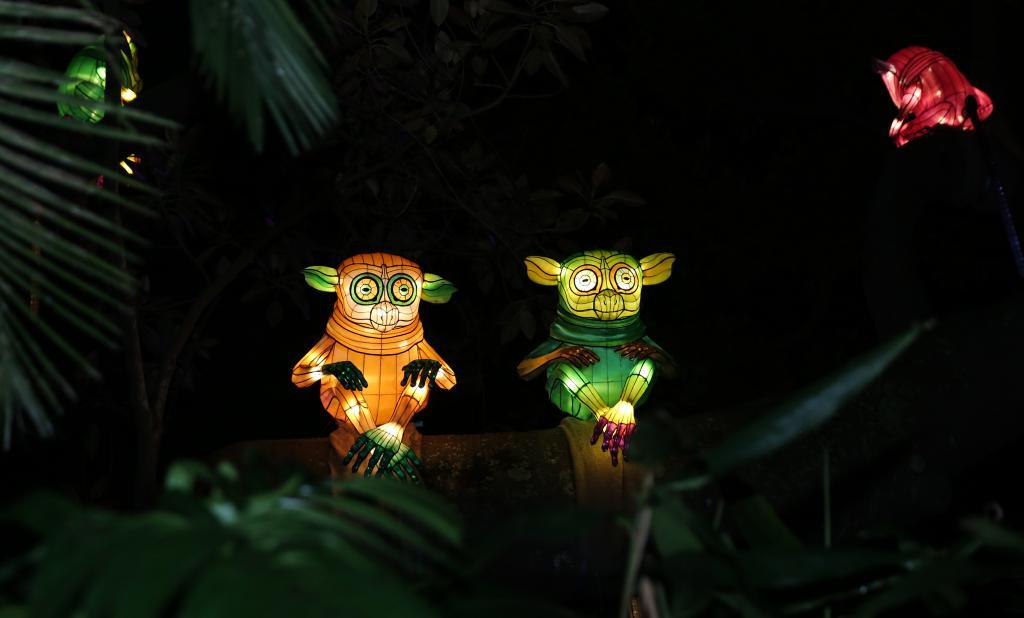 这是   月   日在澳大利亚悉尼塔朗加动物园拍摄的动物造型花灯.