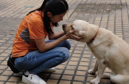 華南近 20 只導盲犬或無家可歸,折射哪些困境?