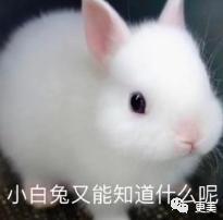 吴亦凡,鞠婧祎,你们好高贵啊…插图(25)