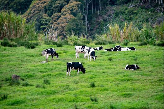 南美小国抢了澳大利亚的生意:全国 50% 牛肉卖给中国,还嫌不够