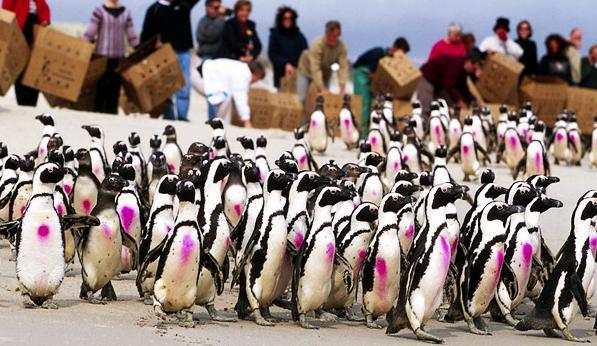 """《企鹅小镇》影评:上层名流""""侵占小岛 40 年,本地居民不仅欢迎,还给他们特权?"""