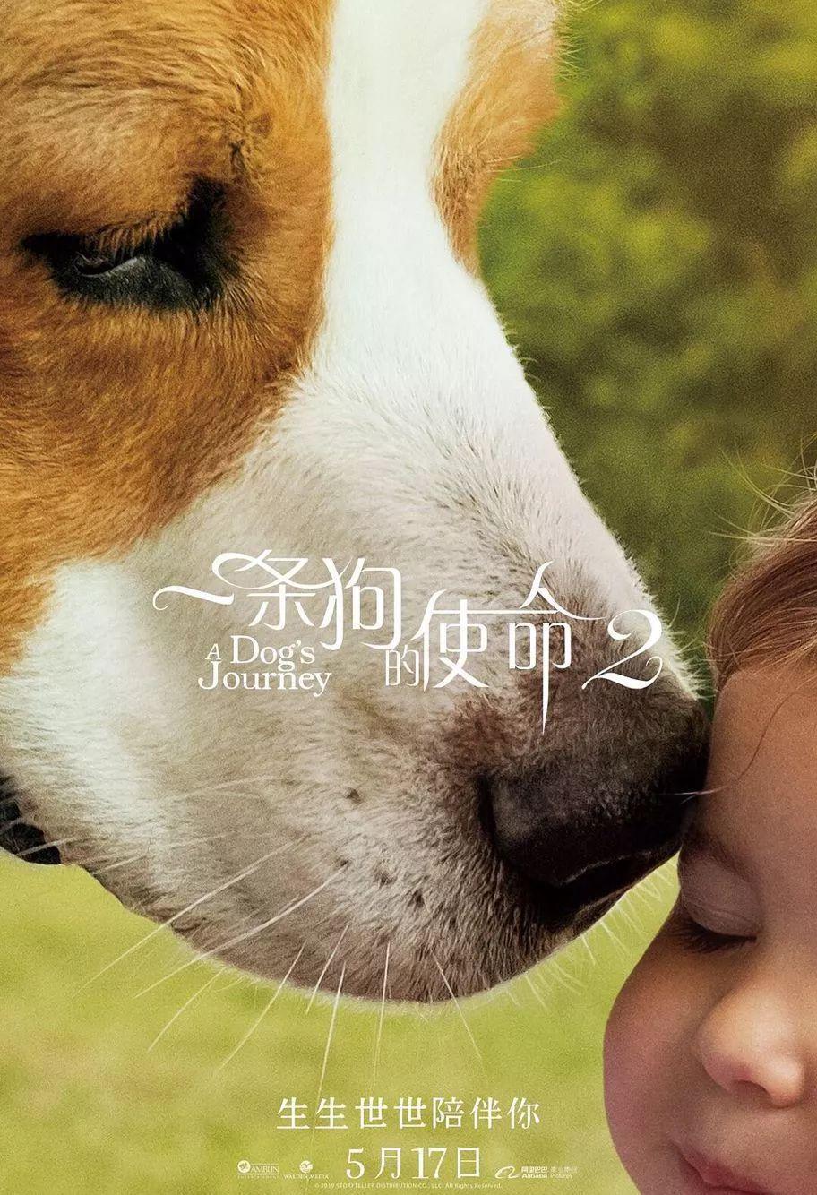 看《一条狗的使命 2》为什么会哭成汪?