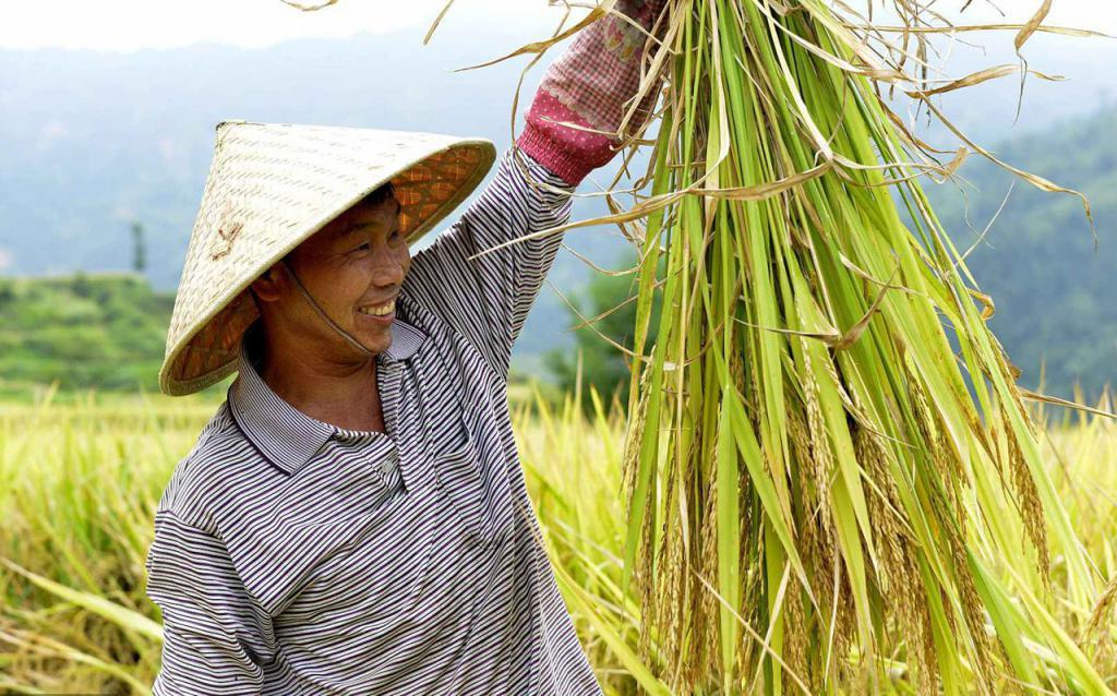 锡利贡米—煮饭香十里