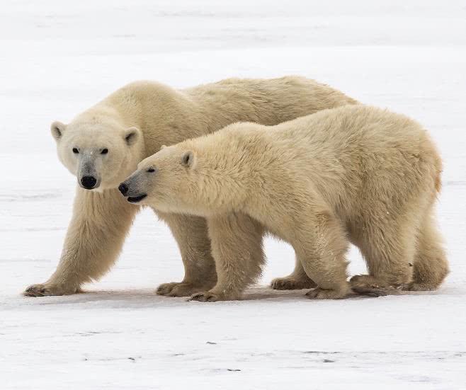 """关押""""北极熊""""的监狱,行为良好就可释放,网友:活久见"""